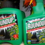 Monsanto's Roundup Glyphosate killer on the shelves at a garden centre in the UK