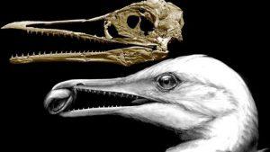 Ichthyornis dispar - not a bird missing link at all