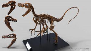 Velociraptor's powerful jaw is nothing like that of Ichthyornis dispar.